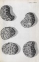 image hooke_micrographia_1665_schem xix