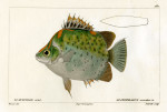 image cuvier g_histoire_poissons_plate 180