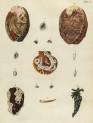 image mendes da costa, e_historia naturalis_1778_pl2