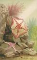 image gosse, p h_the aquarium_1854_plate 3