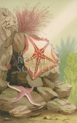 image gosse, p h_the aquarium_1854_plate 3
