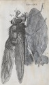 image hooke_micrographia_1665_schem xxvi