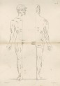 image flower, w- h_diagrams of the nerves of the human body_1872_plate6