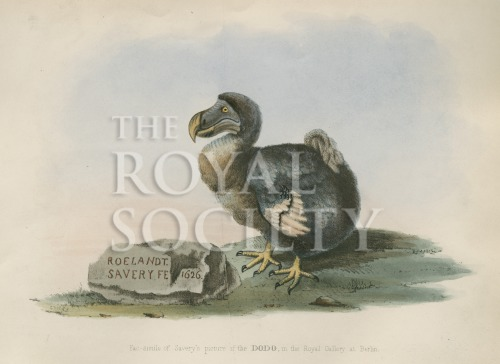 image strickland, h e_the dodo and its kindred_1848_frontispiece