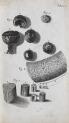 image hooke_micrographia_1665_schemv