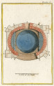 image buffon g_histoire naturelle_nouvelle_1799_v5_plate 4