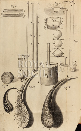 image hooke_r_micrographia_061_copy