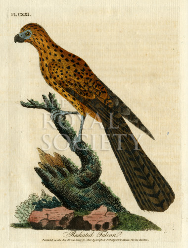 image latham j_supplement_1802_plate 121