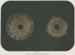 image armstrong w g_supplement---electric movement_plate 10