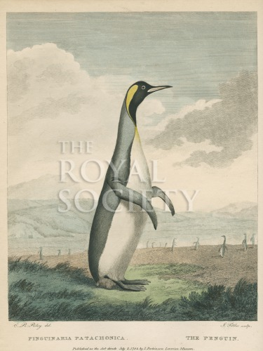 image shaw, g_museum leverianum_1792_plate 34