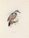 image zoology of captain beecheys voyage_1839_plix