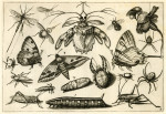 image hoefnagel d i_diversae insectarum_plate 8