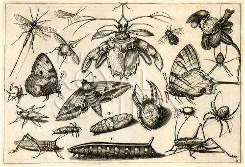 image hoefnagel d i_diversae insectarum_plate 8