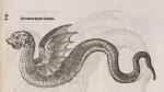 image aldrovandi, u_serpentum et draconum_1640_p419