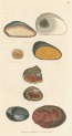 image sowerby j_mineralogy v1_1804_plate 88