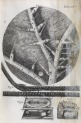 image hooke_micrographia_1665_schem xv