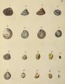 image mendes da costa, e_historia naturalis_1778_pl3