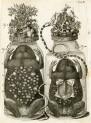 image ruysch f_thesaurus animalium_1710_plate 4