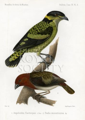 image nouvelles archives du museum_v3_1867_plate 2