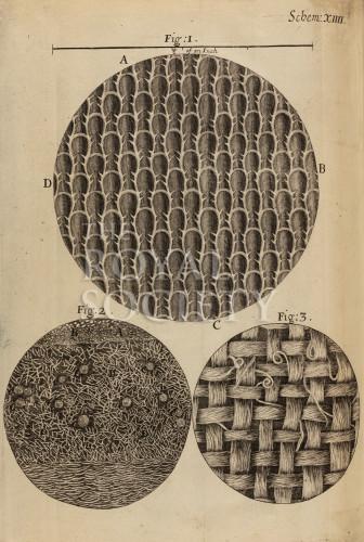 image hooke_r_micrographia_211