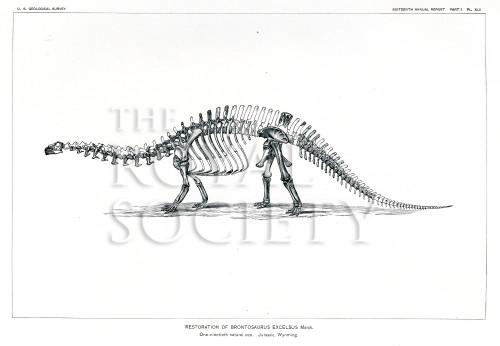 image marsh o c_dinosaurs_1896_plate 42