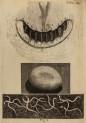 image hooke_r_micrographia_273