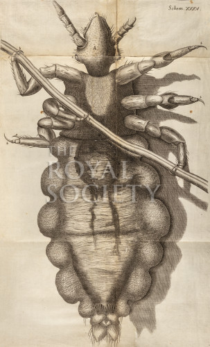 image hooke_r_micrographia_324
