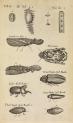 image grew, n_musaeum regalis societatis_1681_tab13