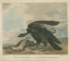image shaw, g_museum leverianum_1792_plate 1