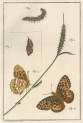 image fuessly_archiv der insect_plate 1