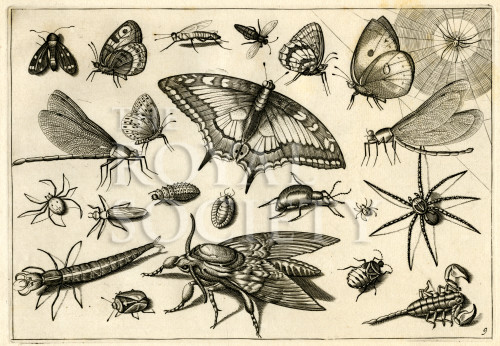 image hoefnagel d i_diversae insectarum_plate 9