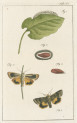 image fuessly_archiv der insect_plate 16
