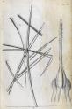 image hooke_micrographia_1665_schem xvi