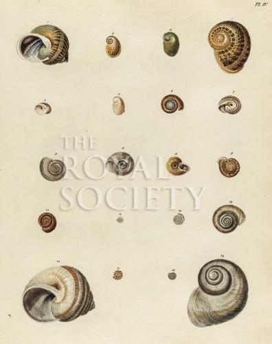 image mendes da costa, e_historia naturalis_1778_pl4