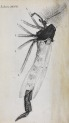 image hooke_micrographia_1665_schem xxviii