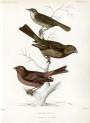 image nouvelles archives du museum_v1_1865_bulletin_plate 2
