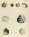 image mendes da costa, e_historia naturalis_1778_pl11