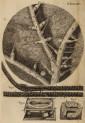 image hooke_r_micrographia_214