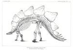 image marsh o c_dinosaurs_1896_plate 52