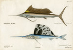 image cuvier g_histoire---poissons_plate 229-230