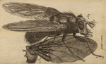 image hooke_r_micrographia_276
