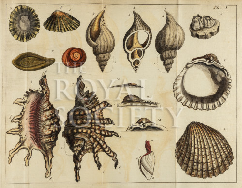 image mendes da costa, e_elements of conchology_1776_pl1_crop