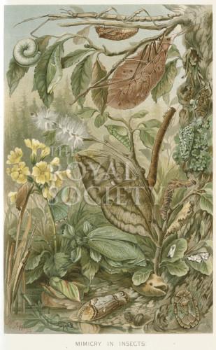 image lydekker r_royal natural history_v6_p10