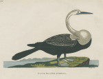 image pennant t_indian zoology_plate 15