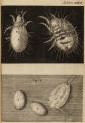 image hooke_r_micrographia_328