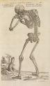 image vesalius, a_de humani corporis fabrica_1555_p205