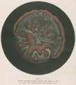 image armstrong w g_supplement---electric movement_plate 5