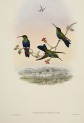 image gould, j_trochilidae hummingbird supplement_1887_part5_jelski