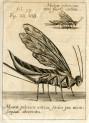 image miscellanea curiosa_1685_figs 7-8