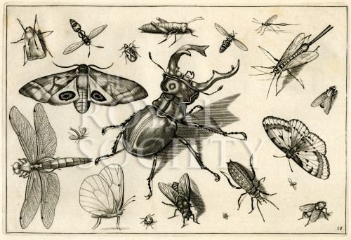 image hoefnagel d i_diversae insectarum_plate 10